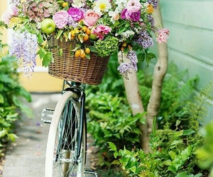 flowers, spring, and bicycle image