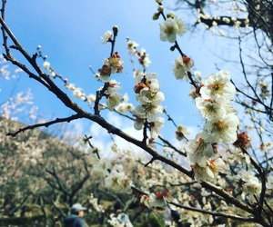 flower, plum, and white image