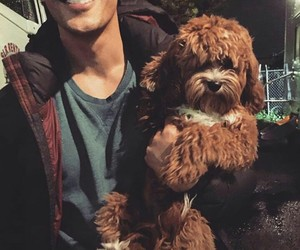 bob morley, bellamy blake, and dog image