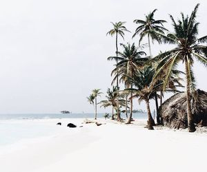 beach, palm trees, and ocean image