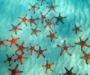 colors, sand, and sea stars image