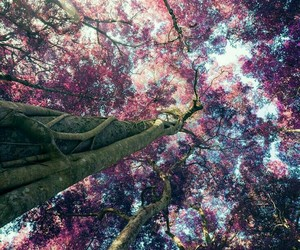 tree, nature, and pink image