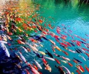 colors, fishes, and nature image