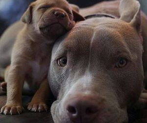 adopt, mother and son, and best friends image