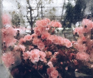flowers, rain, and roses image
