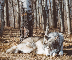 animal, forest, and autumn image