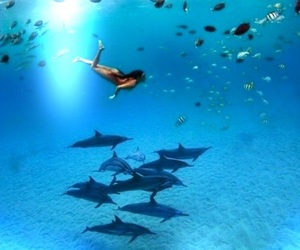 aqua, aquatic life, and blue image