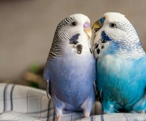 love parrot animals image