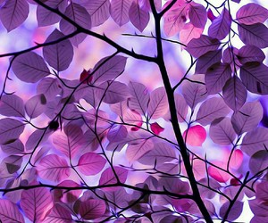 leaves, nature, and purple image