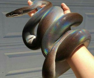 snake, alissaviolet, and bautiful image