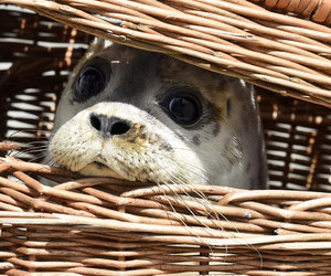 seal, animal, and cute image
