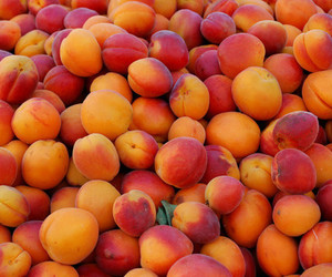 apricot and fruit image