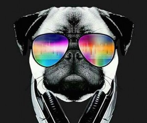 dog, pug, and cool image