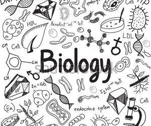 biology, biología, and carpeta image