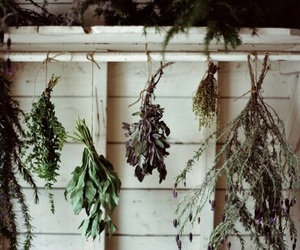 herbs, nature, and green image