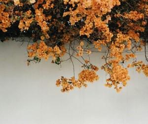 flowers, orange, and garden image