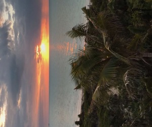 palm trees, sun, and paradise image