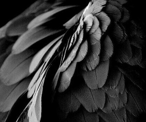 wings and black image