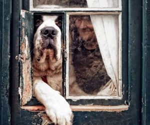 dog, door, and photography image