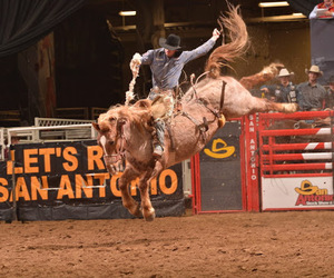 rodeo, San Antonio, and Texas image