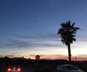 beautiful, california, and palm image
