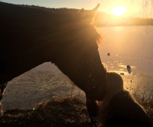 horse, western, and love image