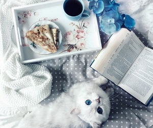 blue, book, and cat image