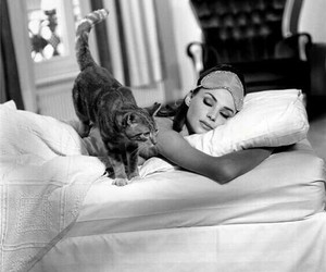 cat, audrey hepburn, and sleep image