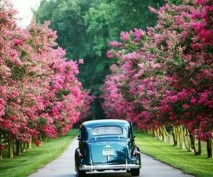 car, flowers, and tree image