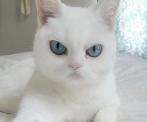 blue eyes, cat, and evil image