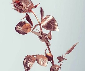 rose, flowers, and rose gold image