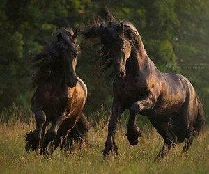 brown, nature, and horse image