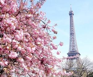 spring, flowers, and paris image
