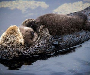 nutria love mother nature image