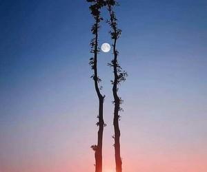 moon, sun, and tree image