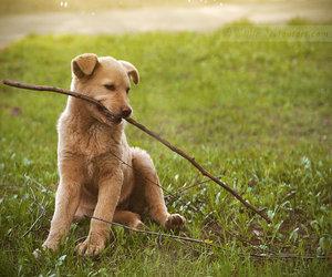dog and twig image