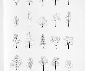 tree, black and white, and drawing image