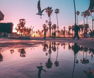 sky, palm trees, and water image