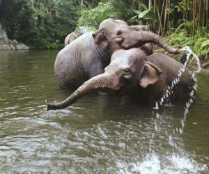 elephant, animal, and water image