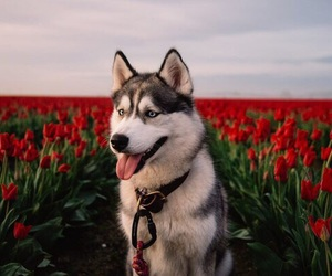 adorable, beautiful, and dog image