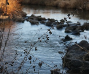 beautiful, plants, and river image