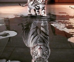 cat, lovely, and tiger image