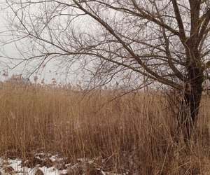 natur, winter, and stille image