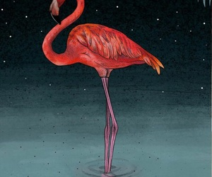 flamingo, my, and pink image