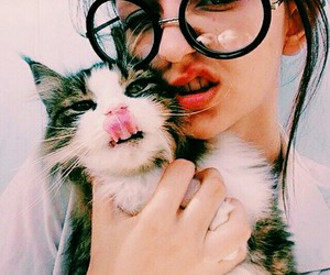 beautiful, style, and cat image