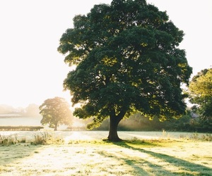 nature, photography, and tree image