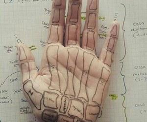doctor, anatomy, and bones image