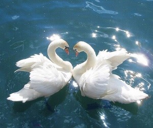 blue, hearts, and swans image