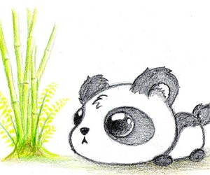 adorable and panda image