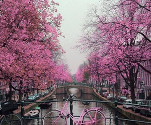pink, tree, and travel image
